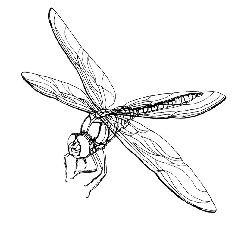 free printable dragonfly coloring pages for kids kids coloring