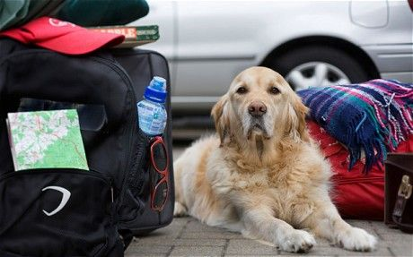 Moving Man S Best Friend A Guide To Taking Pets Abroad Moving To The Uk Pets Dogs Search Rescue Dogs