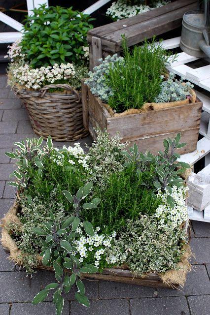 inredningsbloggen piazzan photo by pernilla n kryddv xter herbs gartengestaltung garten. Black Bedroom Furniture Sets. Home Design Ideas