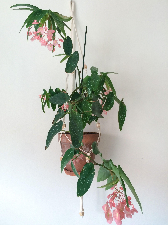 Flowers Makram for big planters Hexagonal