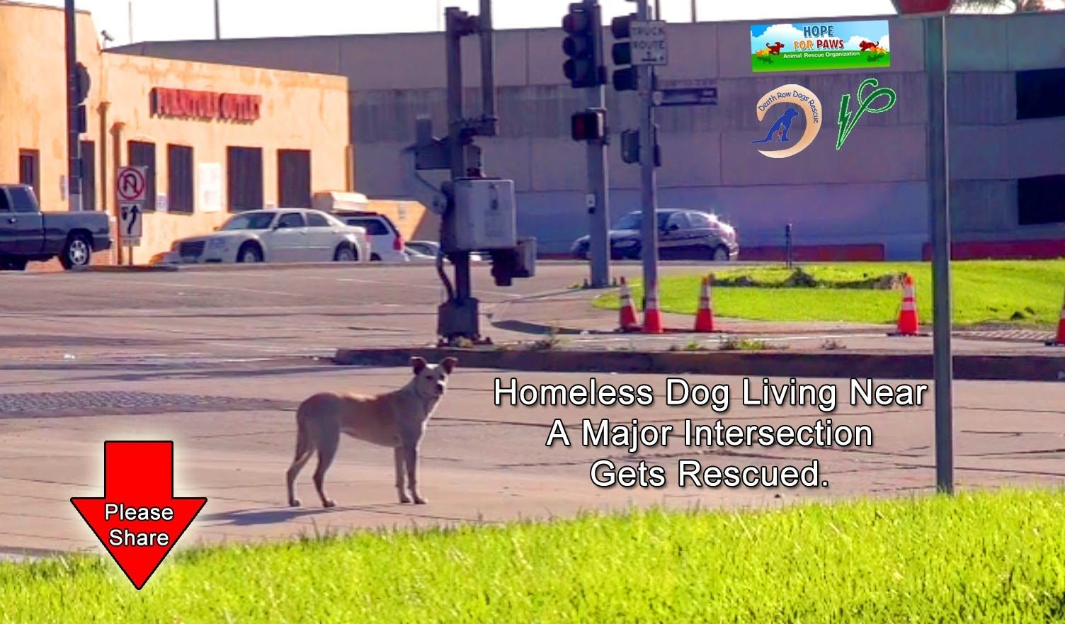A Homeless Dog Living on the Streets Near the Los Angeles International Airport Gets Rescued. Please Repin.
