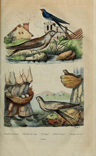 1833-40 - Dictionnaire pittoresque d'histoire naturelle et des phénomènes de la nature