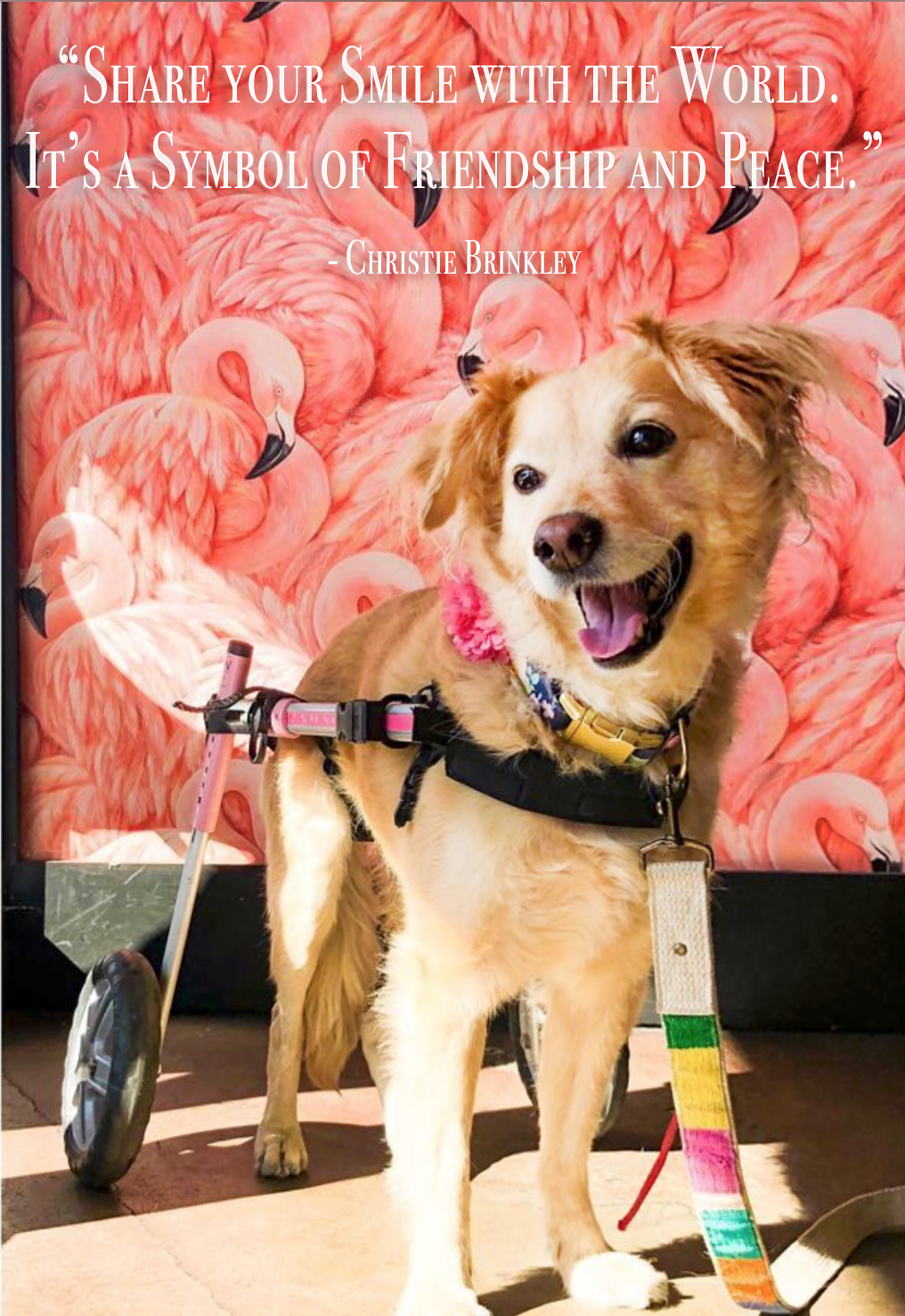 Walkin' Wheels SMALL Dog Wheelchair Walkin' Wheels