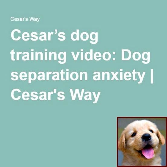 House Training A Puppy For Dummies And Dog Training Courses Kennel