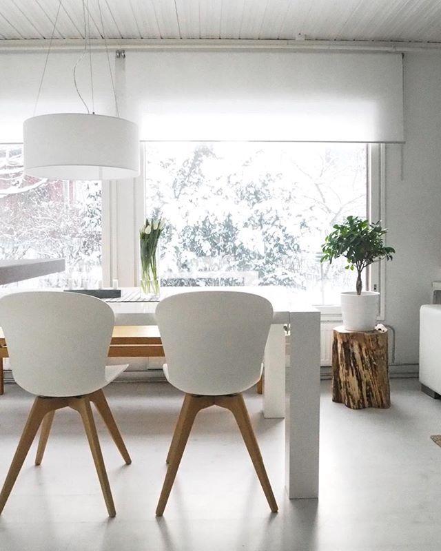 Valkoinen lumi ja lumen painamat puut ikkunan takana. Valoa tulvii kotiin ❄️…