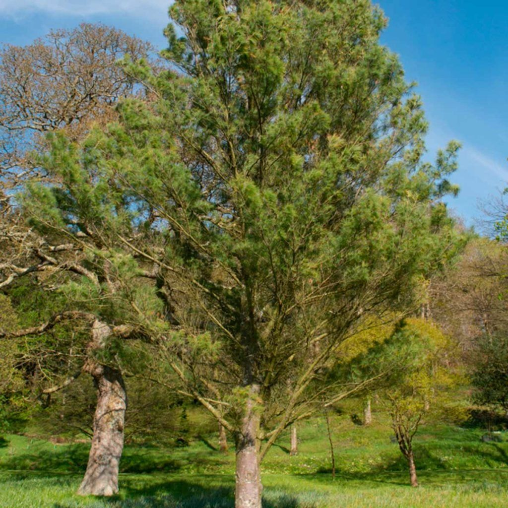10 fastgrowing trees to fill out your landscape in 2020