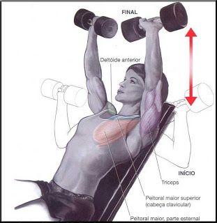 Supino inclinado com halter   Fitness body, Dumbell workout ...