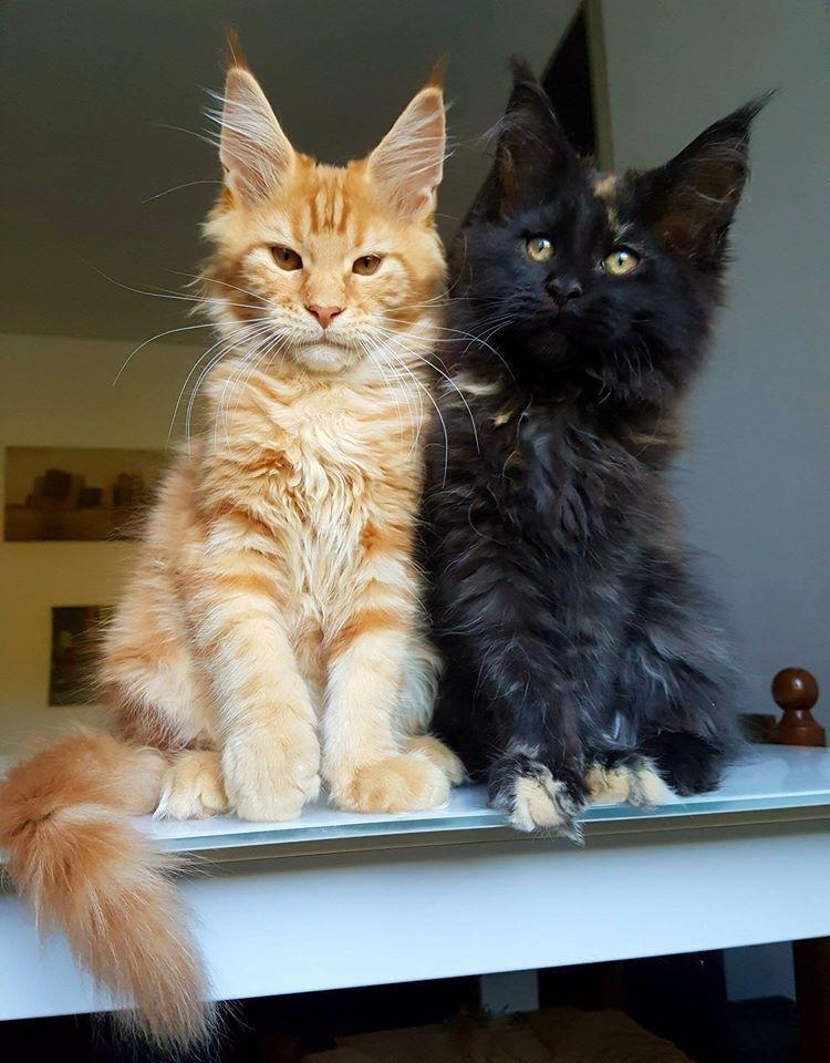Pin On Meow Meow