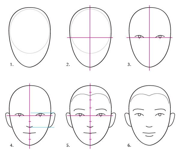 Human Anatomy Fundamentals Basics Of The Face Tuts Design