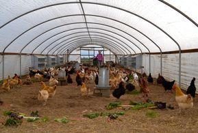 Chicken Coop Plans For 50 Chickens With Chicken Coop Plans For Chickens  With Inside Shed