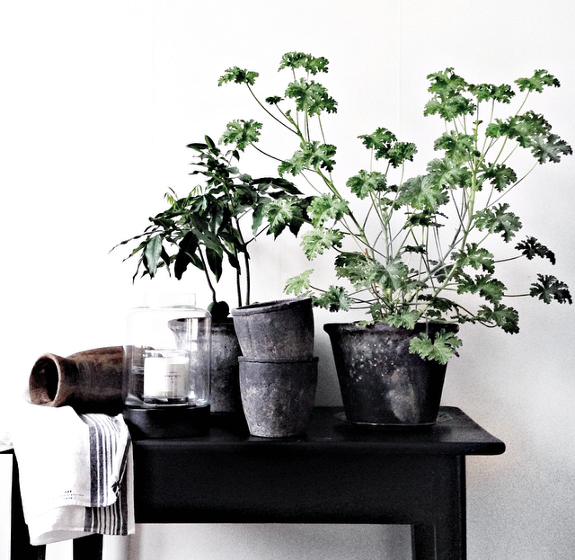 Planters in beautiful #vintage steel planters