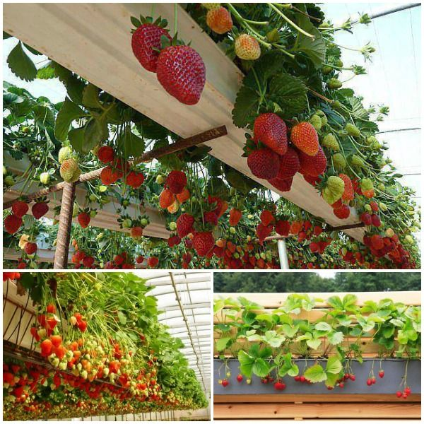 How To Build A Vertical Planter Part - 46: Wonderful DIY Rain Gutter Strawberry Planter