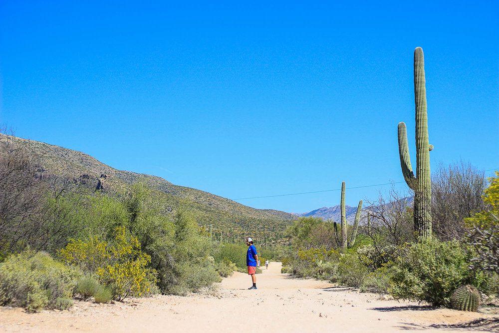 Sabino Canyon National Forest, Tucson Arizona, NuventureTravels.com, Saguaro Cactus, Desert