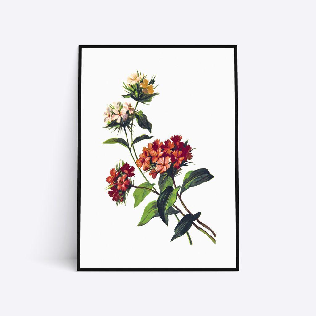 Wild Flowers I 2020 Vilde Blomster Plakater Illustration