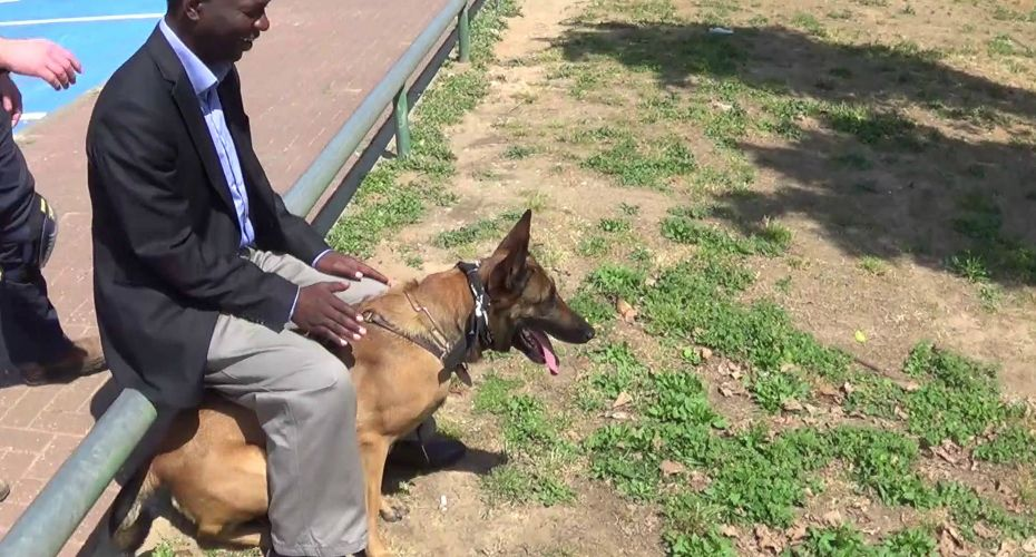 Well Trained Dog Knows How To Stop Knife Attacks Dogs Gaurd