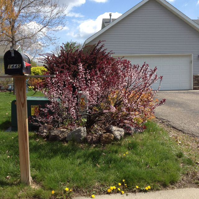 Also will hide the utility boxes | Yard landscaping ...