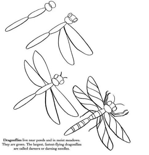 How To Draw A Dragonfly Name Drawings Bugs Drawing Drawings