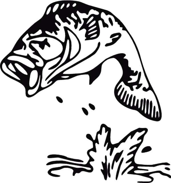 Sea Stripped Bass Fish Coloring Pages Best Place To Color Fish Coloring Page Coloring Pages Color