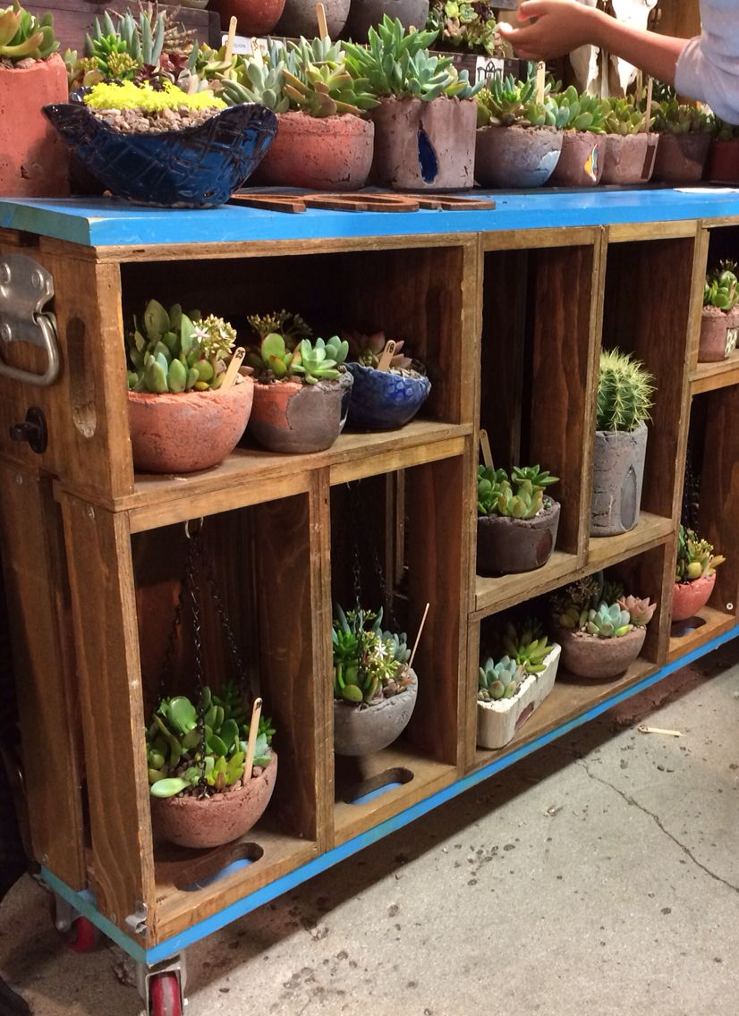Salvaged pallet wood cabinets with succulents Salvaged