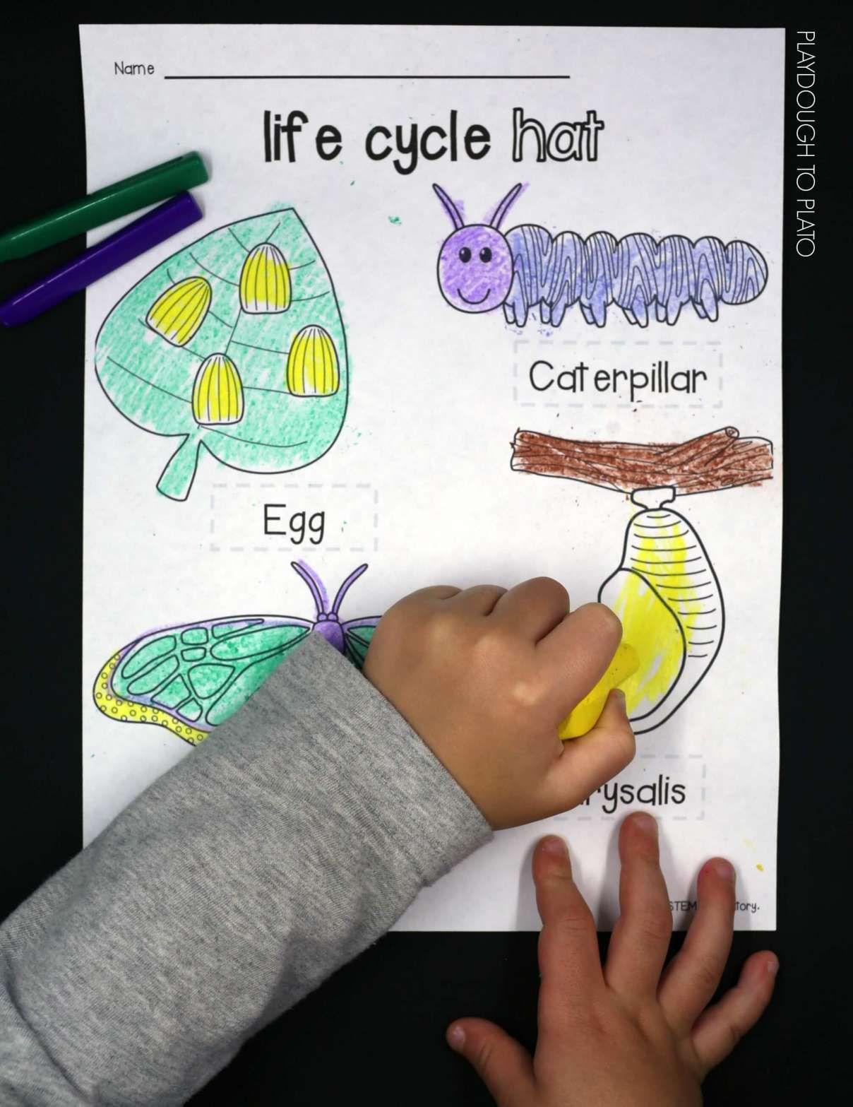 15 Butterfly Cycle Worksheet Kindergarten