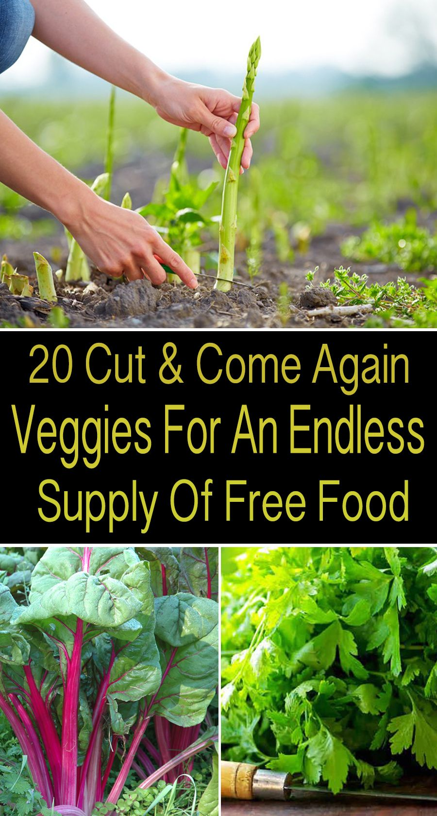 Know the endless supply of free food with these 20 cut and come veggies #herbsgarden