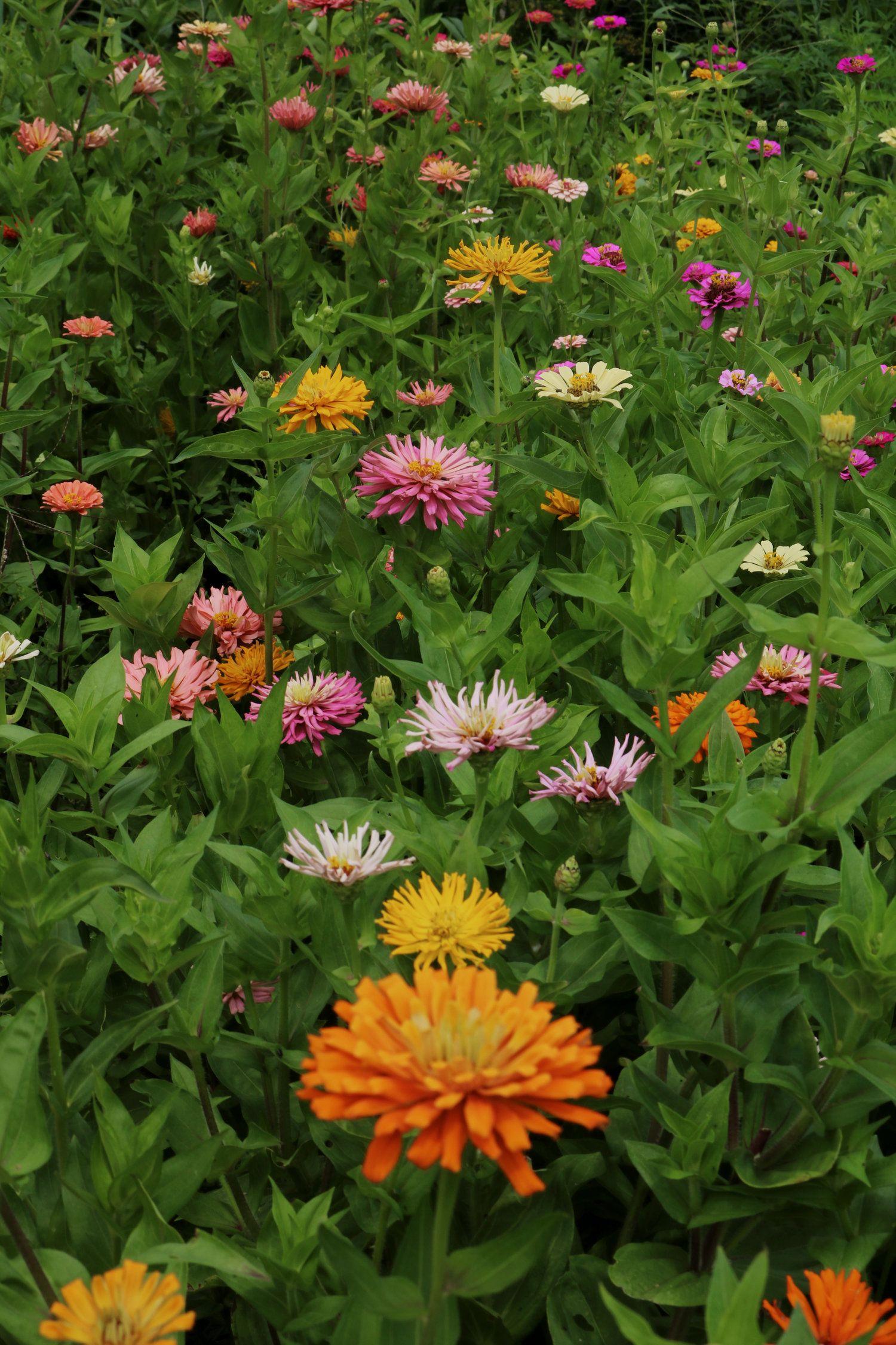 10 Tips For The Beginning Gardener