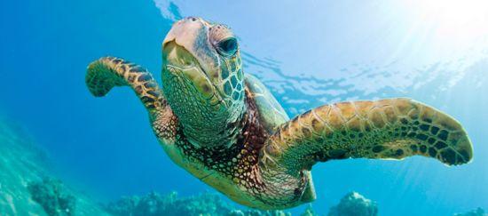 Dia Mundial De Las Tortugas Tortugas Marinas Tortugas Y Perros
