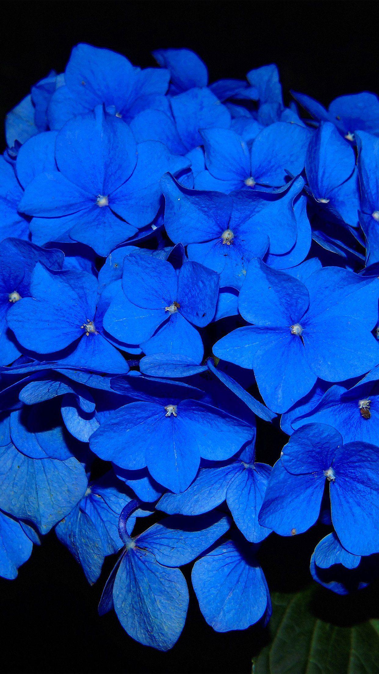 cool hydrangeablossomflowerbluedarknatureiphone6