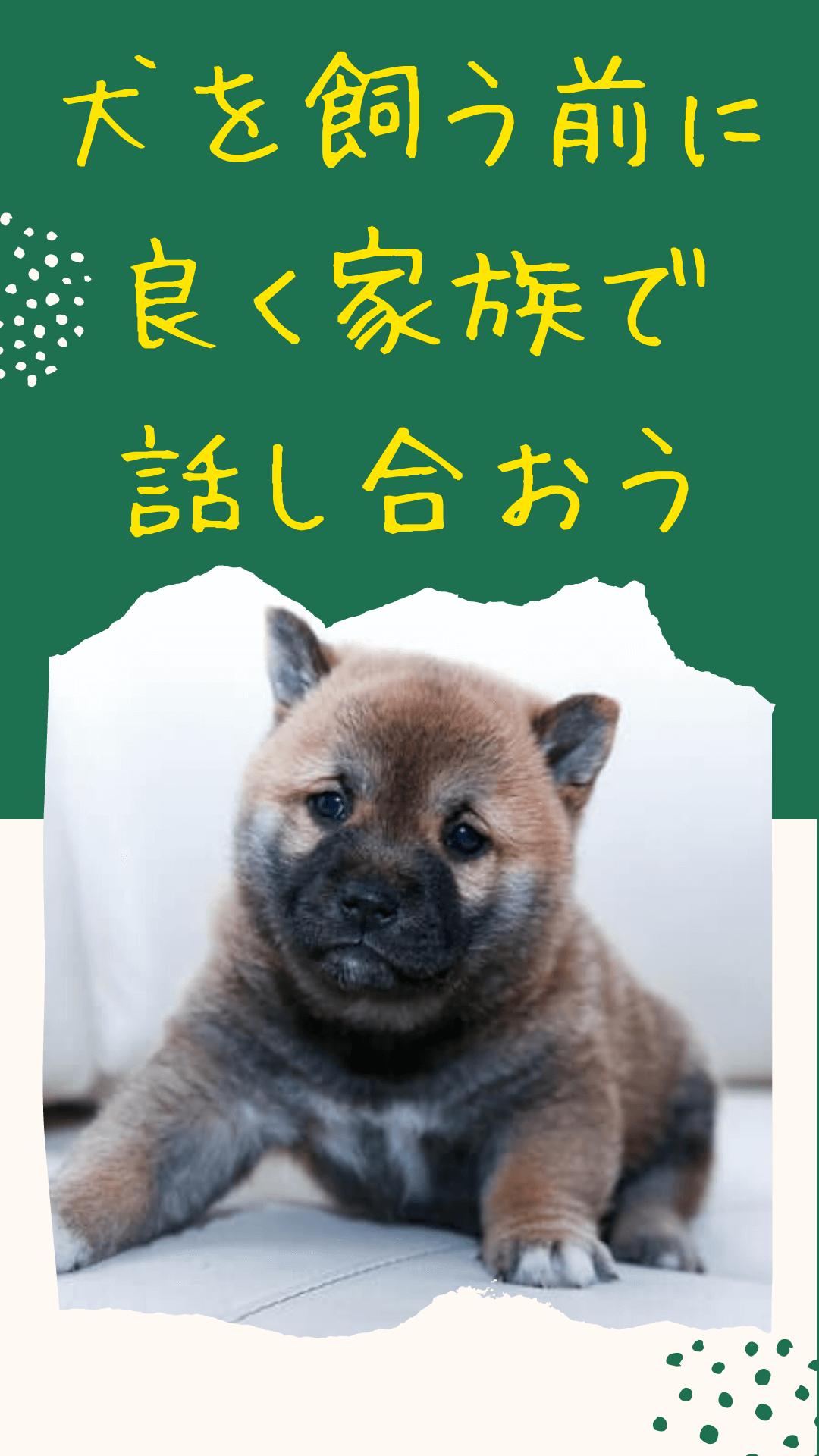 犬を飼う前に良く家族で話し合おう 犬 動物 ペットショップ
