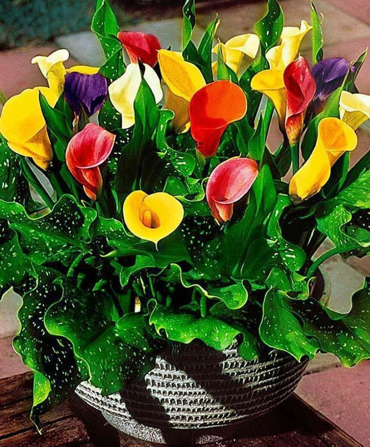 Tulips so colorful  ✨