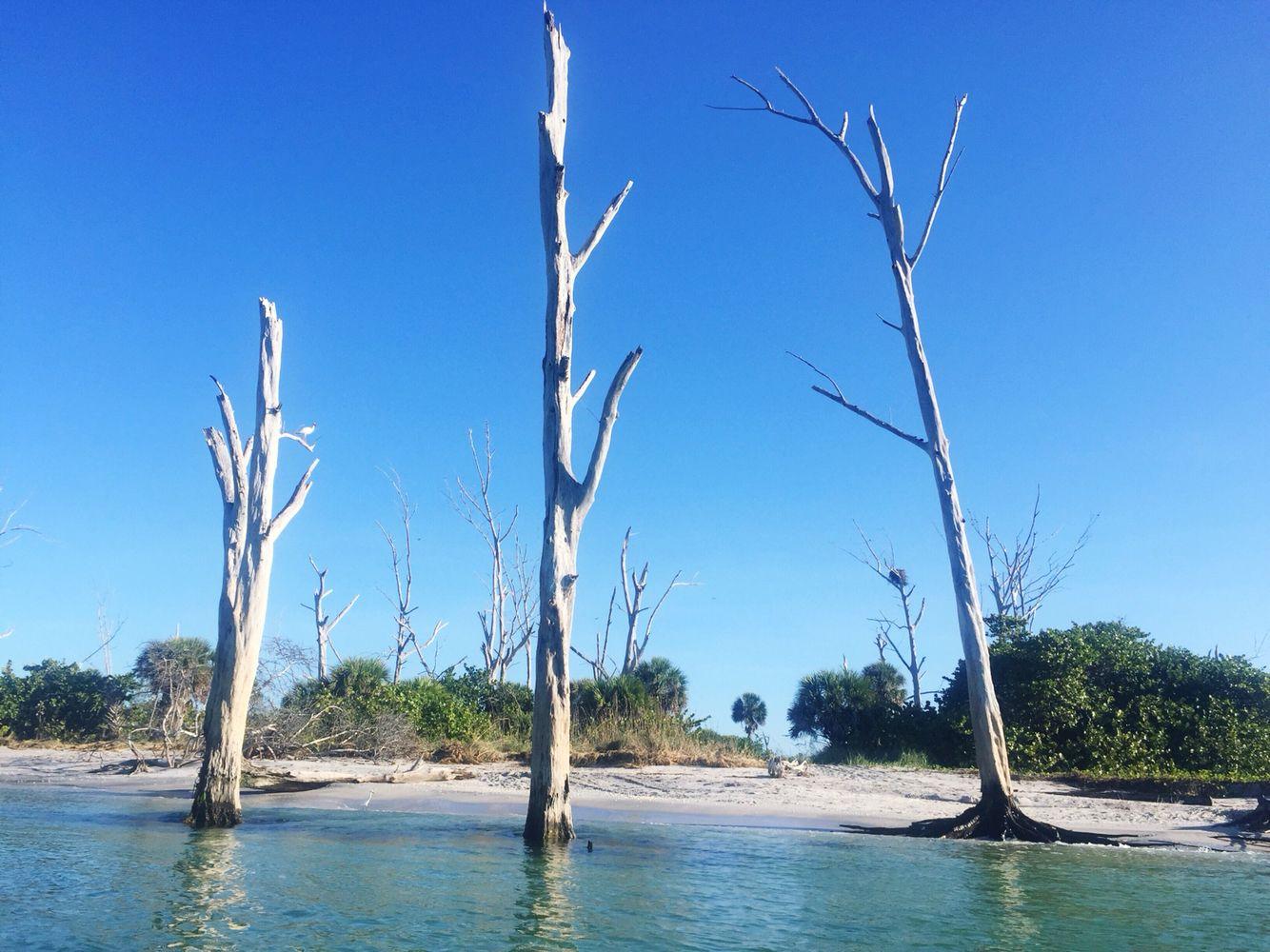 Stump Pass Beach Park, Florida | State parks, Vacation