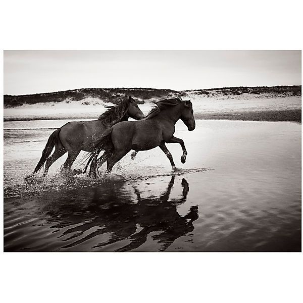 Soul Mates Photographs ($3,000) ❤ liked on Polyvore featuring home, home decor, wall art, black white wall art, photo wall art, horse wall art, animal wall art and horse home decor