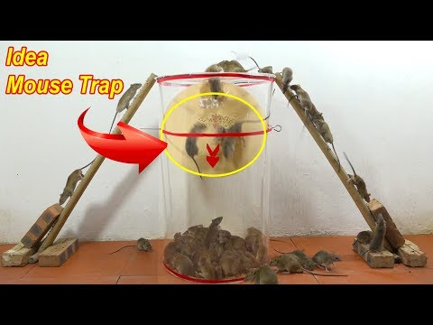 Easy Mouse Trap/Idea Rat Trap Homemade/Mouse Trap is Super Simple with Plastic/MouseTrap2019