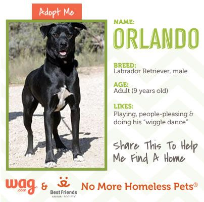 Want To Adopt Orlando Visit The Best Friends Animal Society For More Info At Http On Fb Me Ithzdq Animal Society Best Friends Homeless Pets