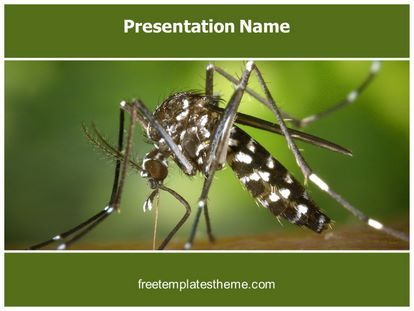 Get this free malaria mosquito powerpoint template with get this free malaria mosquito powerpoint template with different slides for you upcoming powerpoint presentation free malaria mosquito ppt toneelgroepblik Images