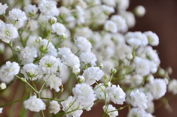 Baby S Breath Wedding Trend Winter White Flowers How To Wire Flowers Video Babys Breath Flowers Flower Seeds Baby S Breath Plant