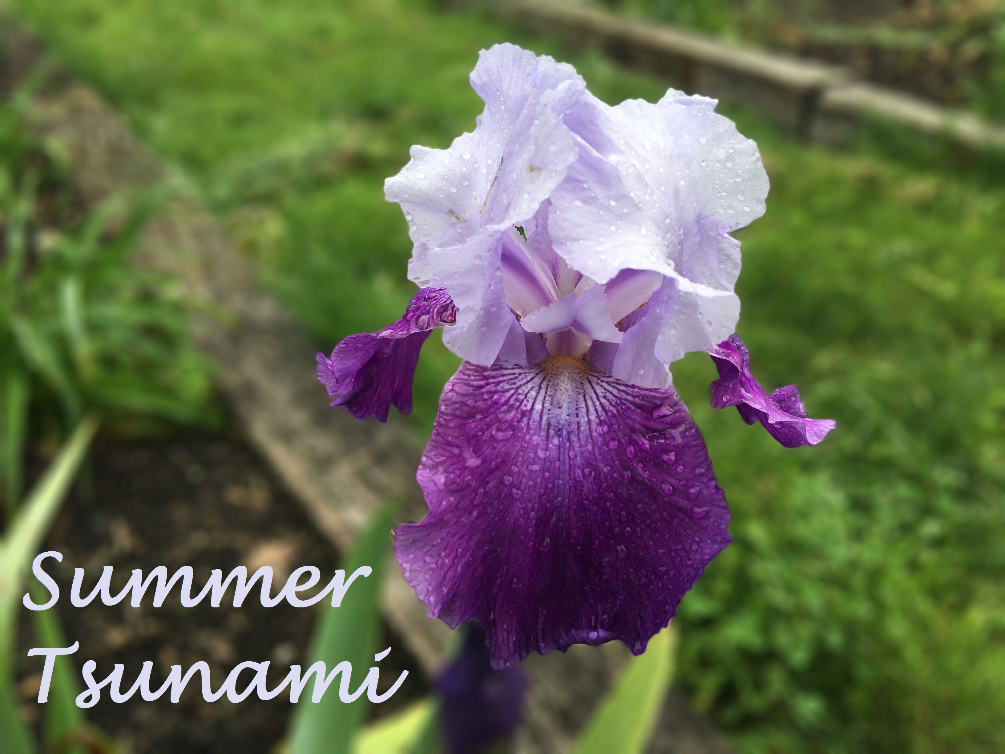 Summer Tsunami