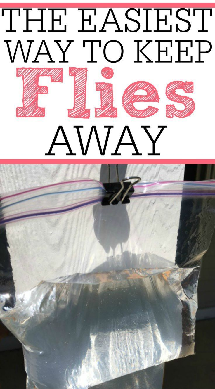 Tired Of Flies Bugging You All Day Long? Try This Simple And Inexpensive  Tip To