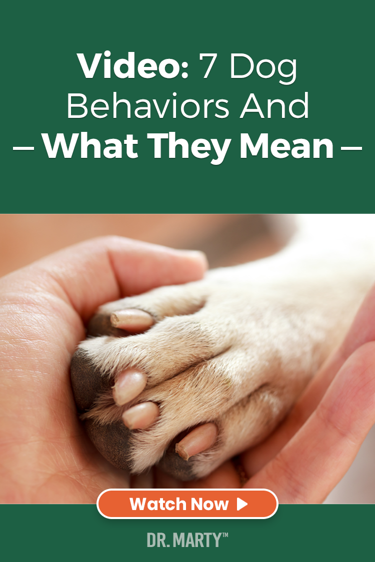 Dog Behavior By April Beky On Bulldogs And Bassett S In 2020 Dog Food Recipes Animal Nutrition