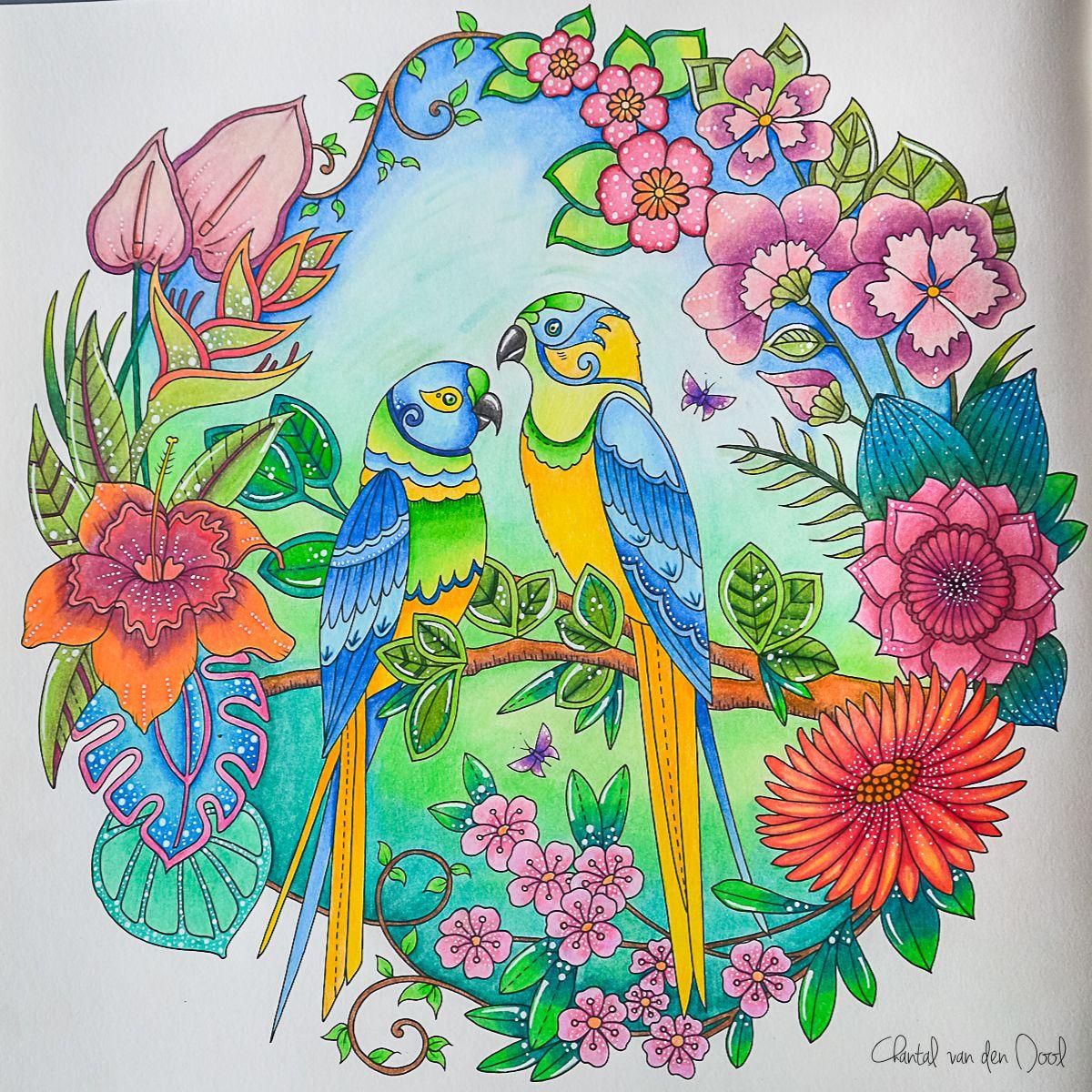 Johanna Basford Magical Jungle Faber Castell Polychromos Farbstift Kunst Wenn Du Mal Buch Bilder