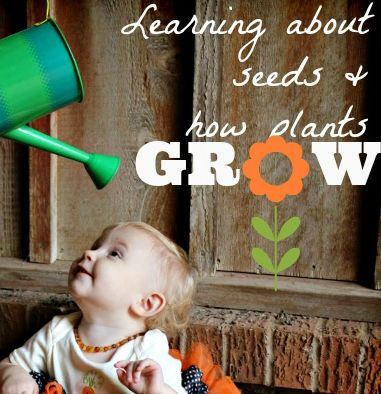 Grow-a-Tot. Get a big enough pot where your toddler can sit inside of it. Water them with a watering can and have them grow! We did this when my daughter turned one because it was part of her Grow Birthday, but it's also just a great activity for them to do while playing.