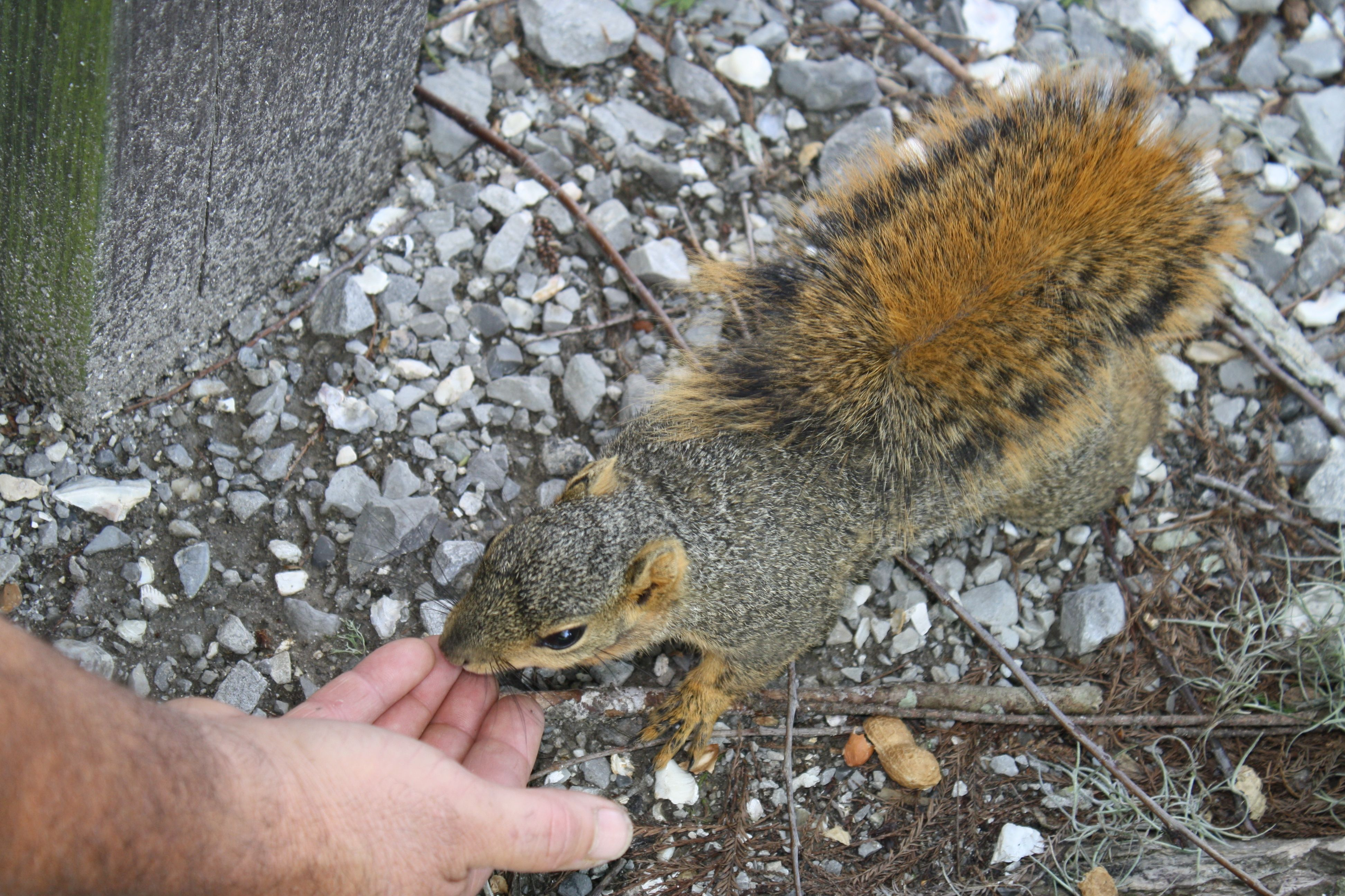 My husband feeding the squirrel this reminds me of my