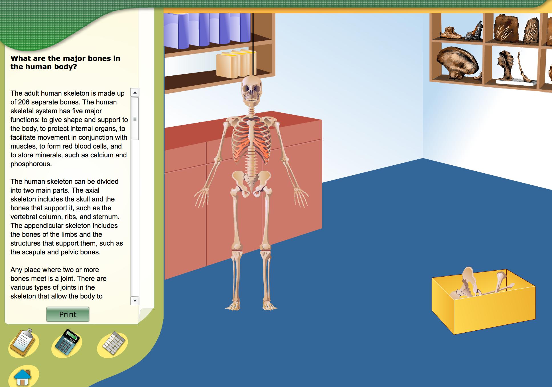 Virtual Lab Bones In The Human Body 5th Grade Science Pinterest