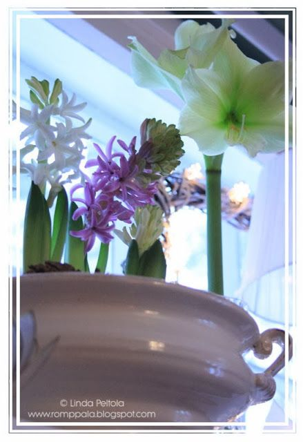 hyacinth arrangement, lemon lime amaryllis