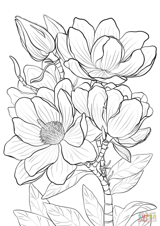 Campbells Magnolia Super Coloring Dibujos Flores Para Dibujar