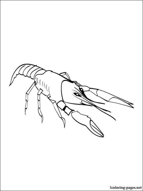 Crawfish, Crayfish Coloring Page To Print Out Coloring Pages
