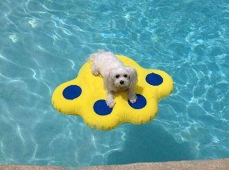Doggy Lazy Raft Small Dog Pool Dog Pool Floats Lazy Dog