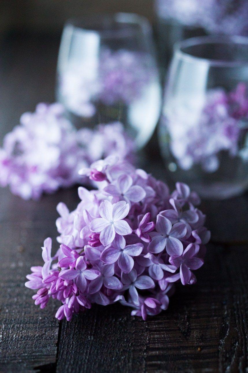 Lilac Water Recipe Lilac Blossom Lilac Lilac Tree