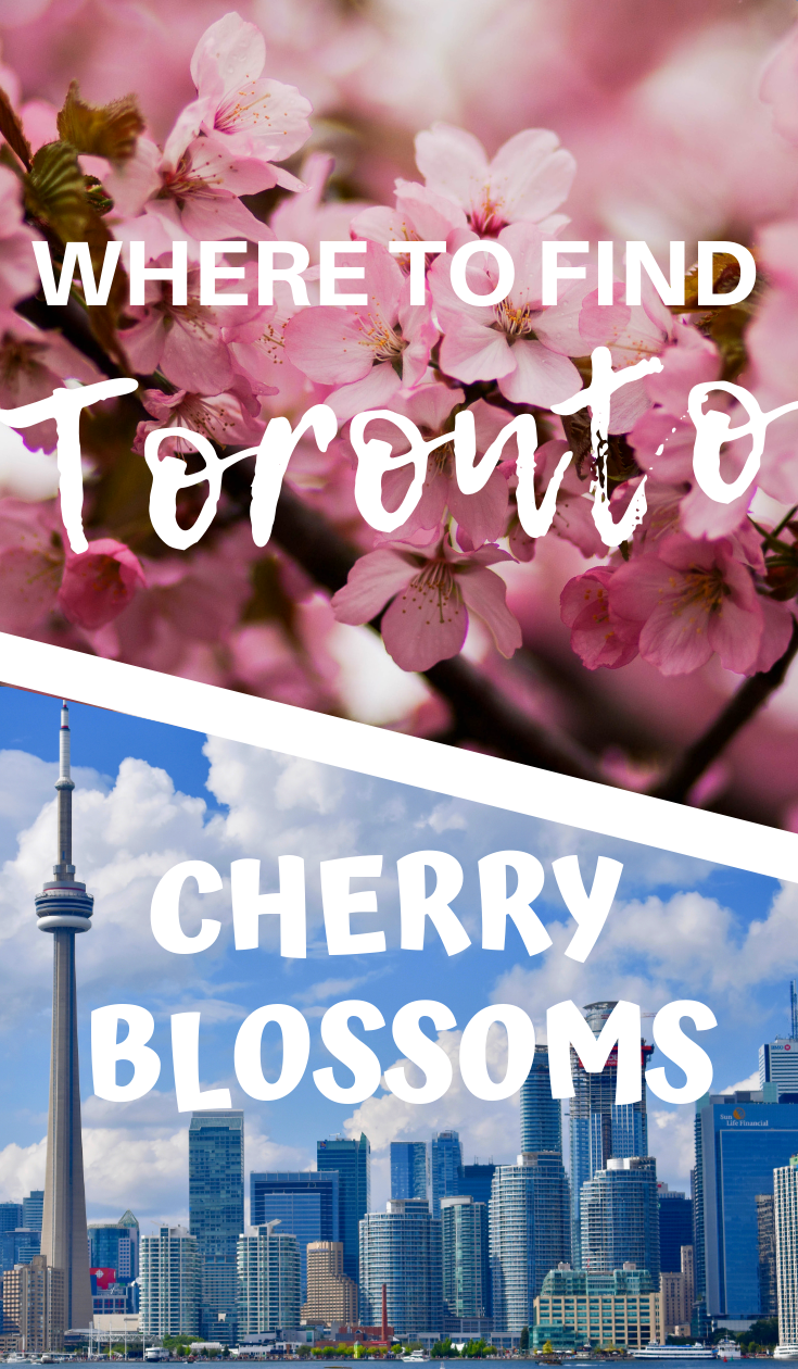 Where To Find Cherry Blossoms In Toronto The World As I See It Toronto Travel Canada Travel Ontario Travel