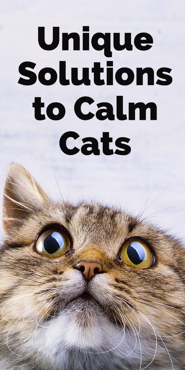 3 Unique Solutions to Calm Your Cat (With images